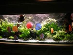Idee Decoration Aquarium : id e d co aquarium discus ~ Melissatoandfro.com Idées de Décoration