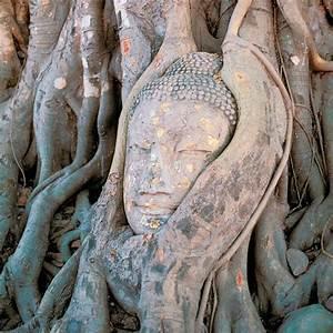 Wurzeln Im Kopf Berechnen : die wurzeln eines gewaltigen banyanbaumes umschlingen den kopf einer buddha statue in der n he ~ Themetempest.com Abrechnung