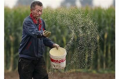 Humans Farming Plants Seeds Dispersal Farmer Farmers