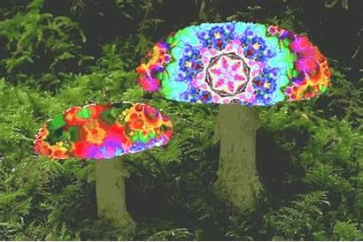 Mushrooms Drug Magic Take Safest Dazed