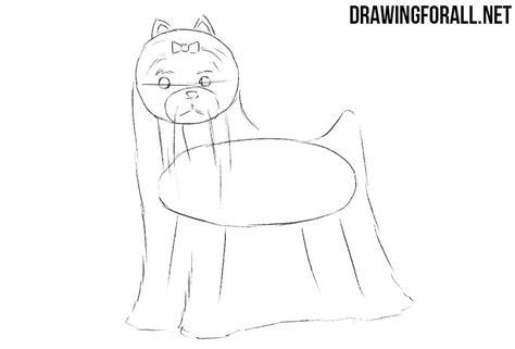 draw  yorkshire terrier drawingforallnet
