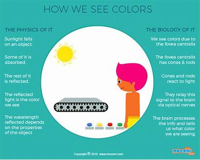 Colors Mocomi Science