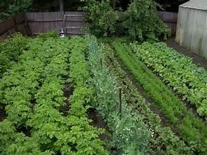 Inspiring backyard vegetable garden with various plants for Vegetable garden