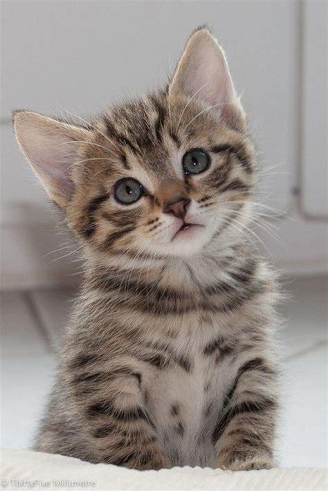 248 Besten Süße Tiere ;) ♡ Bilder Auf Pinterest Kätzchen