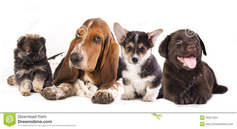 group  dogs stock images image