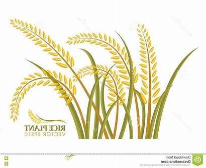 Rice Vector Plant Background Clipart Graphics