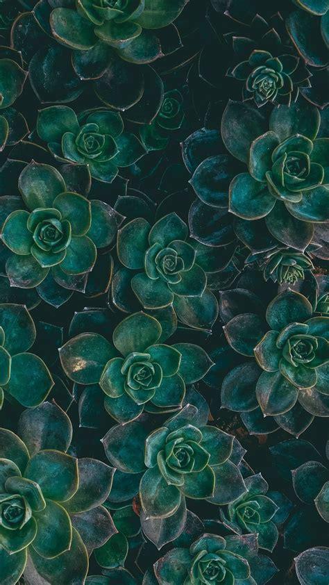 1080 x 1920 jpeg 2530 кб. Dark Green Background Wallpaper (69+ images)