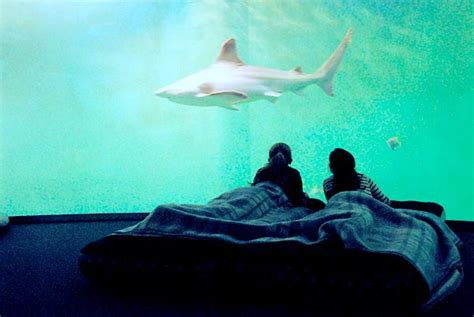 hotel belgique avec dans la chambre grand aquarium de malo dormir au milieu des requins