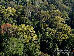 Danum Valley - Danum Valley Rainforest Beauty Experience ...