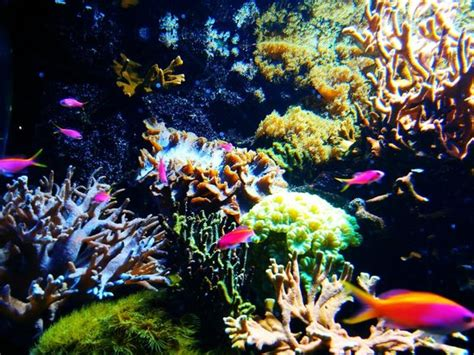 aquarium du cap d agde aquarium du cap d agde cap d agde top tips before you go tripadvisor