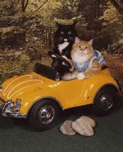 cat car an elevator injury joel bieber firm
