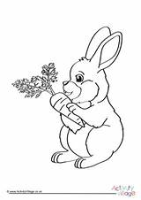 Rabbit Colouring Pages Bunny Rabbits Explore Carrots sketch template