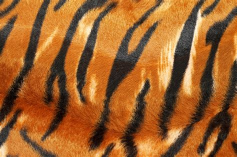 Animal Wallpaper Pattern - tiger pattern in hd hd desktop wallpaper instagram photo