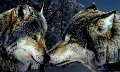 Beautiful Nature Animal Wallpapers - beautiful nature animals wolf wallpapers gallery