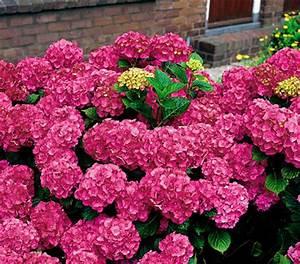 Wann Dahlien Pflanzen : rosen pflanzen standort gartenhaus gebraucht ~ Frokenaadalensverden.com Haus und Dekorationen