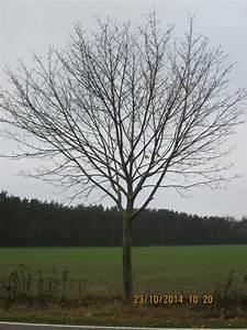 Glanzmispel Rote Blätter Fallen Ab : hurra der herbst ist da warum die bl tter bunt werden ~ Lizthompson.info Haus und Dekorationen
