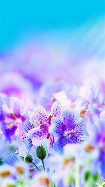 Purple Wallpapers Pretty Iphone Flowers 6s