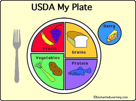 food groups  food pyramid food theme page