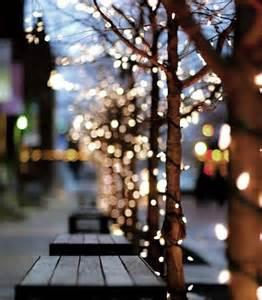 trees twinkle lights pinterest