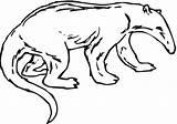 Anteater Coloring Drawing Printable Clipart Looking Getdrawings Supercoloring Categories sketch template