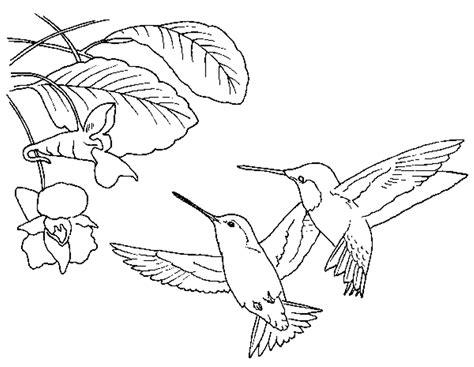 hummingbird coloring page  print