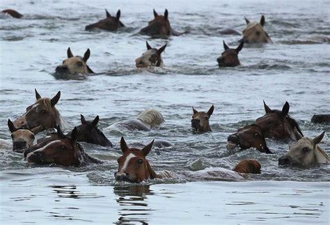 swim horses horse horsebreedspictures