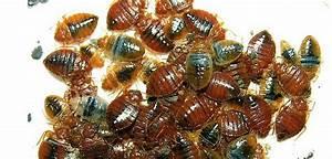 blog new leaf pest control With bed bugs portland oregon
