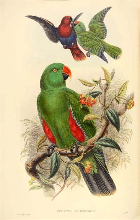 rare set  john goulds bird books  sale  pictures