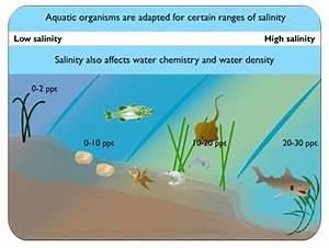 Estuaries  Salinity