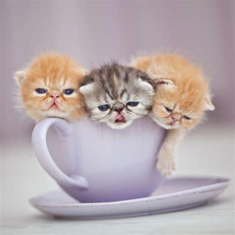 tazas  estan llenas de animalitos tiernos