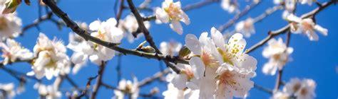 printemps si e social chiny au jardin inscriptions exposants tourisme chiny si