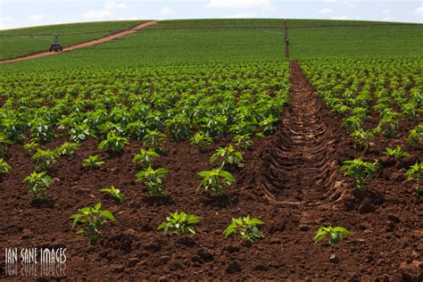 integrated fish farming benefits  polyculture