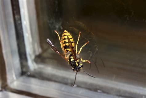 wespennest im rolladenkasten wespennest im rolladenkasten die wespen feuerwehr hilft