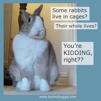 Funny Easter Bunny Memes - rabbit ramblings funny bunny memes