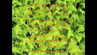 Fractal Patterns Fractals Nature Fern Natural Ferns