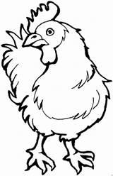 Hahn Colorare Gallina Chook Disegno Chicken Curiosa Template Kopf Dreht Tiere Disegni Malvorlage Ausmalbilder Gratis Coloring Malvorlagen sketch template