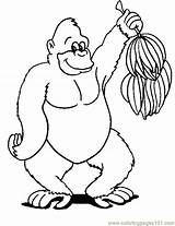 Gorilla Coloring Pages Monkey Ape Banana Printable Drawing Monkeys Animal Cartoon Sheets Drawings Colouring Face Easy Coloringpages101 Getcoloringpages Mountain Getdrawings sketch template
