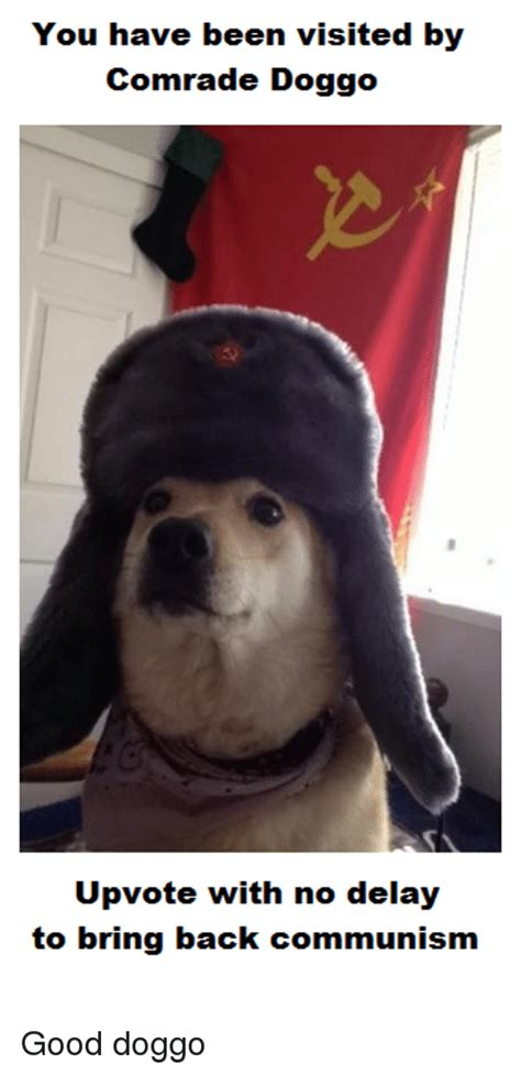 25 Best Memes About Comrade Doggo Comrade Doggo Memes