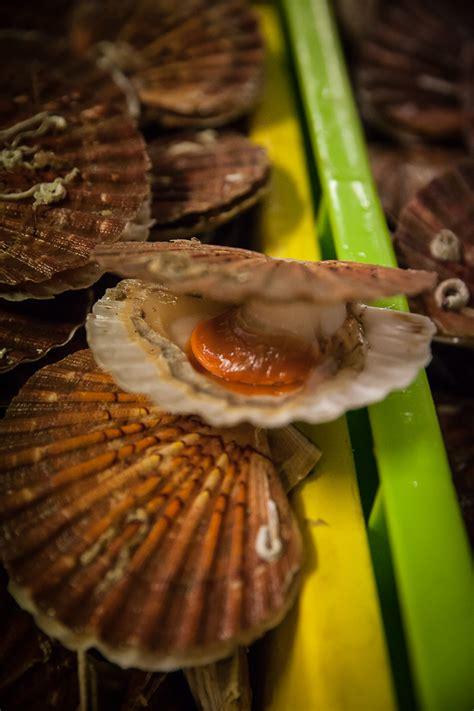 cuisiner le corail des coquilles jacques jacques en sabayon de moutarde truffée les st