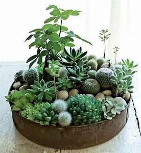 25+ Best Ideas about Indoor Cactus on Pinterest | Cactus ...