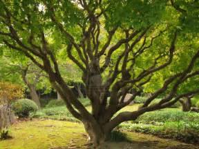 unique tree by adi5893 on deviantart