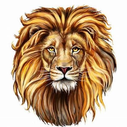 Lion Illustrations Face Clip Head Vector Illustration