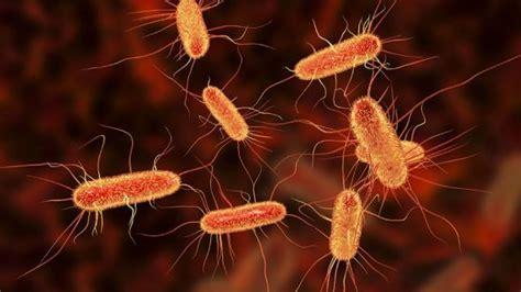 E. Coli Outbreak In Kentucky Sickens Nearly 50 People