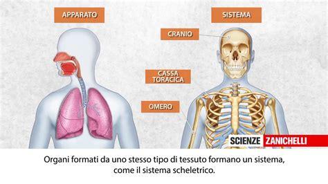 addome organi interni 28 diagnosi energetica