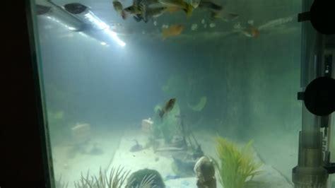 eau de l aquarium trouble et pr 233 sence d algues
