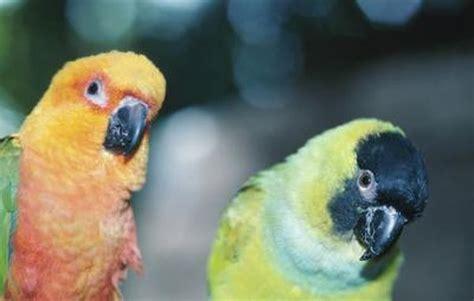 parakeet survive   partner dies pets