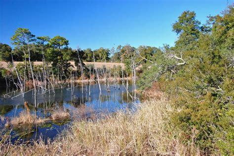 Panoramio  Photo Of Niceville, Florida Scenery
