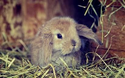 Bunnies Bunny Galaxy