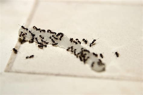 tiny ants in kitchen around sink kitchen how to get rid of tiny ants in the kitchen 2017