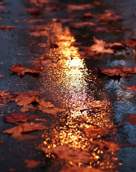 tumblr autumn tumblr photography fall leaves fall
